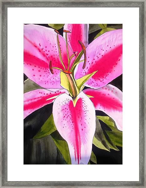 Lily Tenerife Framed Print by Sacha Grossel