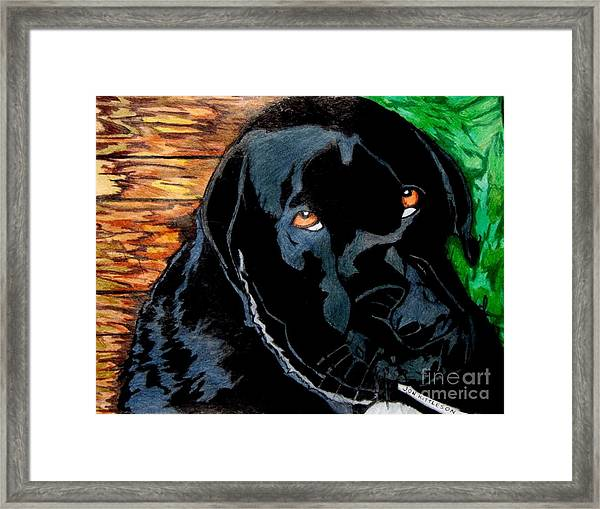 Lily The Dog Framed Print