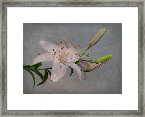 Framed Print featuring the photograph Pink Lily With Texture by Patti Deters