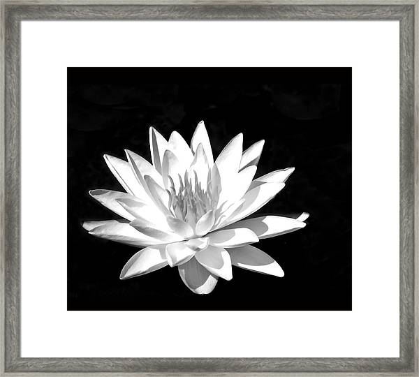 Lily#2 Framed Print by Joe Bledsoe