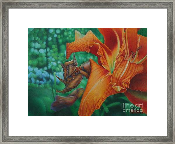 Lily's Evening Framed Print