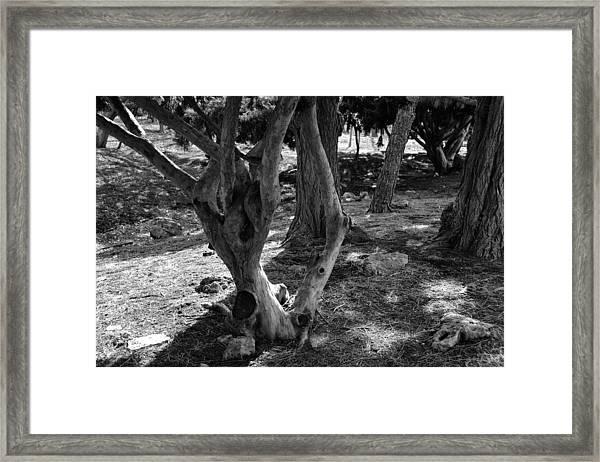 Lincoln Park01 Framed Print