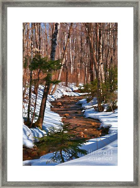 Lincoln Woods Trail Framed Print