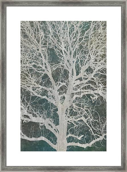 Linden Tree Framed Print