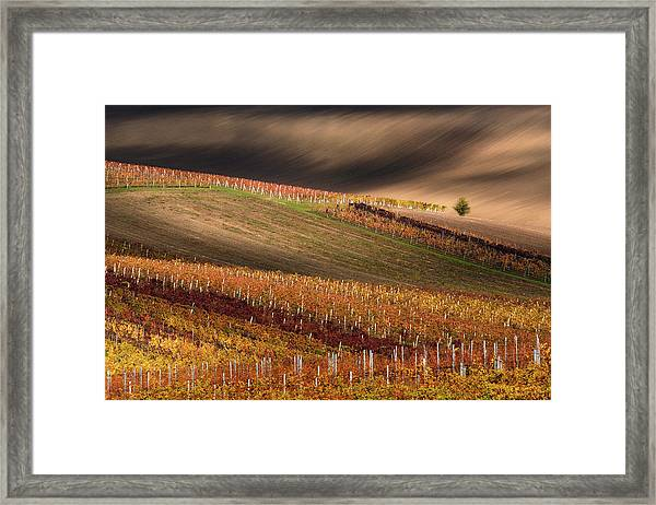 Line And Vine Framed Print