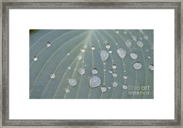 Lining Up Framed Print