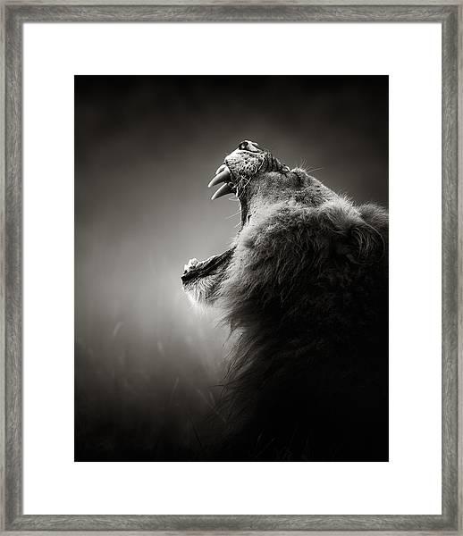 Lion Displaying Dangerous Teeth Framed Print