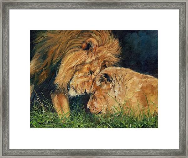 Lion  Love Framed Print