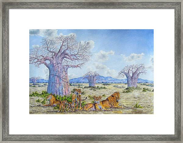 Lions By The Baobab Framed Print