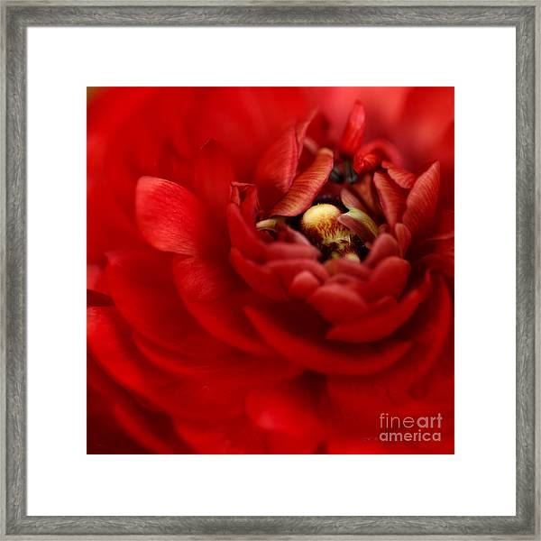Lip Smackin Framed Print by Beve Brown-Clark Photography