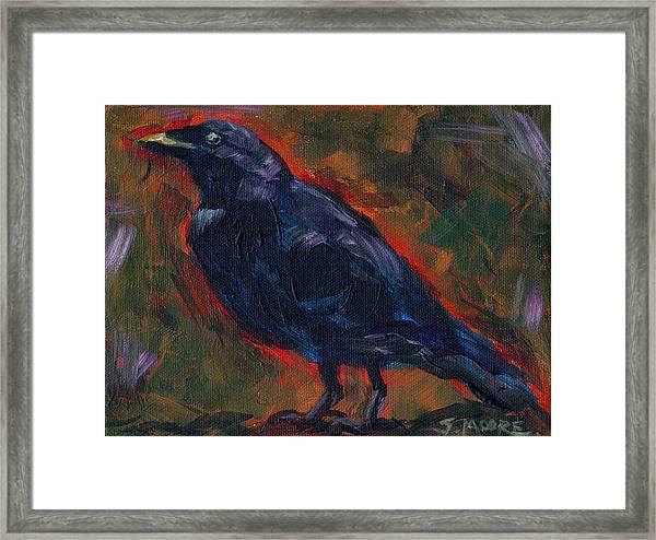 Lisa's Blackbird Framed Print by Susan Moore