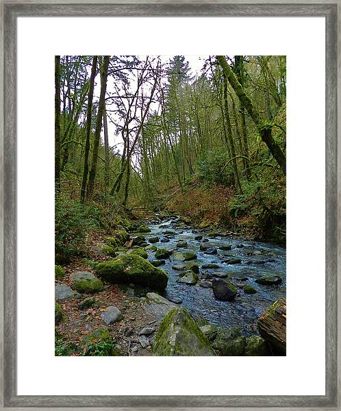 Listening To The Creek Framed Print by Charles Lucas