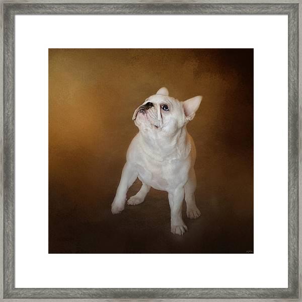 Little Beggar - White French Bulldog Framed Print