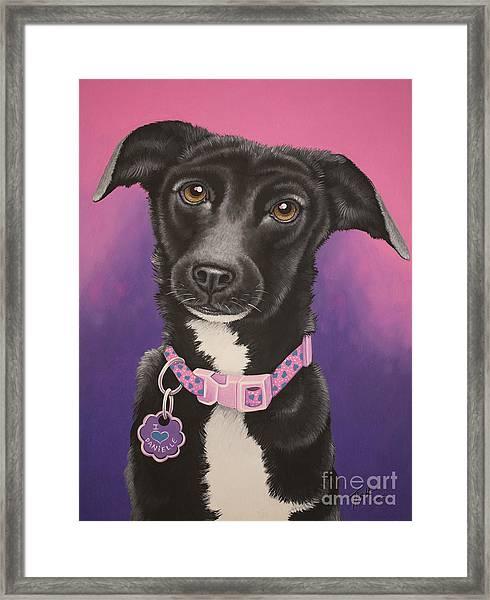 Little Black Dog Framed Print