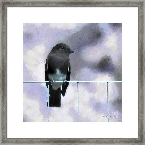 Little Black Phoebe Framed Print