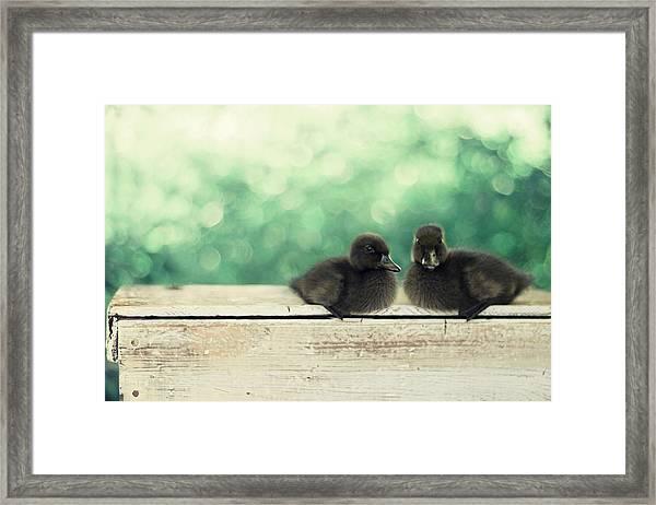 Little Buddies Framed Print