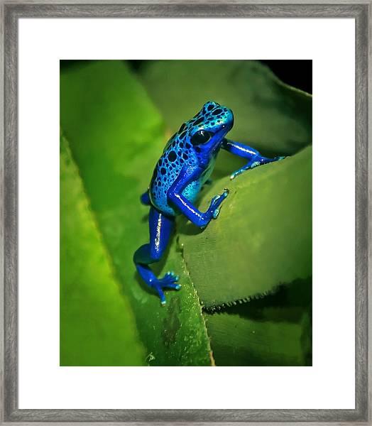 Little Garden Friend Framed Print
