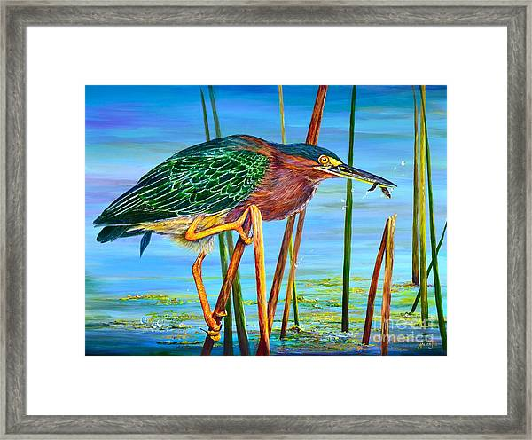 Little Green Heron Framed Print