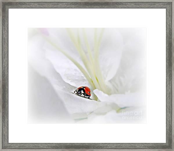 Little Ladybug Framed Print