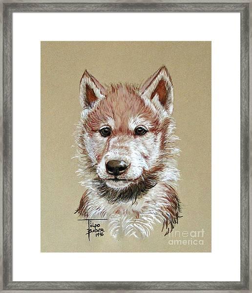 Little Lobo Framed Print