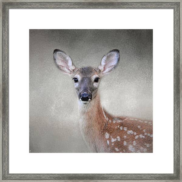 Little Miss Lashes - White Tailed Deer - Fawn Framed Print