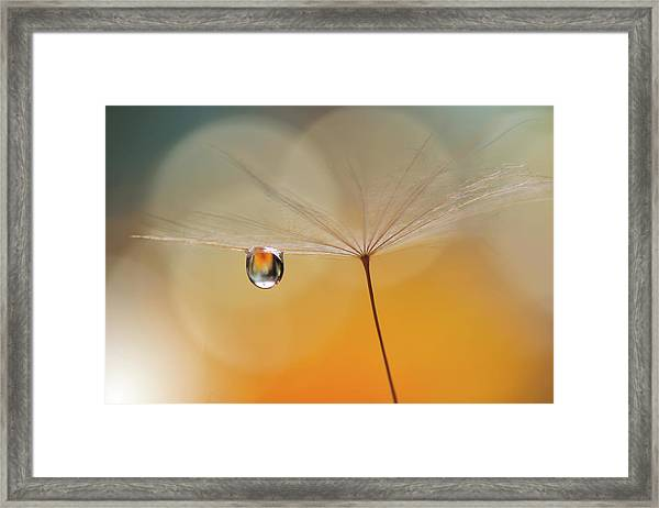Little Night Music... Framed Print