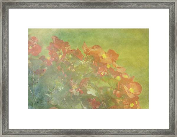 Little Red Beauties Framed Print