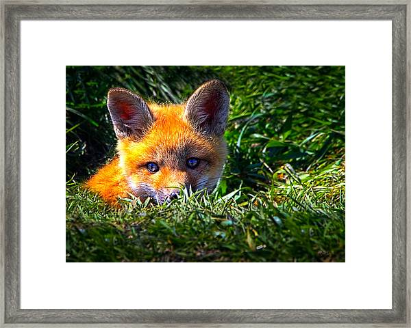 Little Red Fox Framed Print