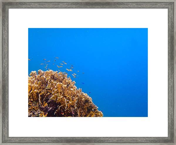 Little Reefers Framed Print