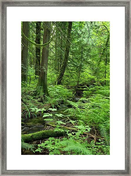 Little Stream In The Woods Framed Print