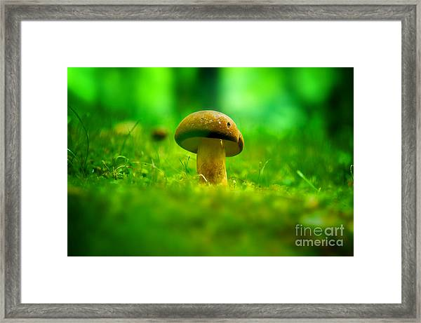 Little Wild Mushroom On A Green Forest Patch Framed Print