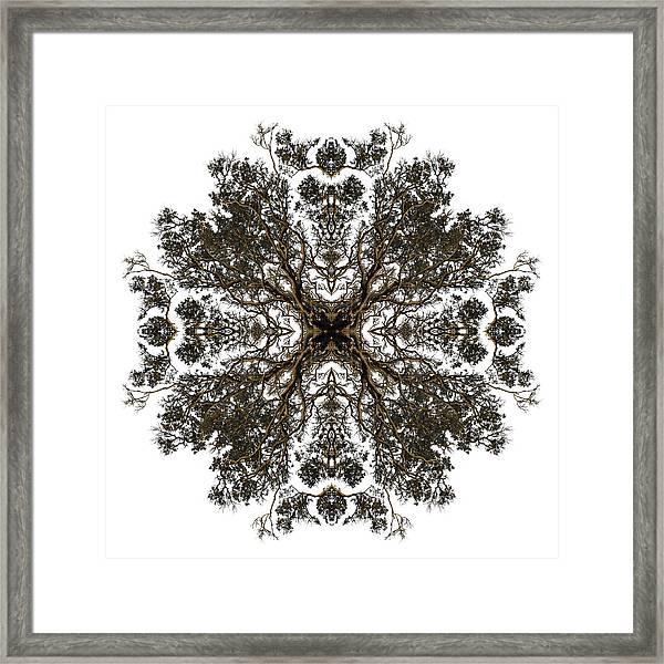 Live Oak Lace Framed Print