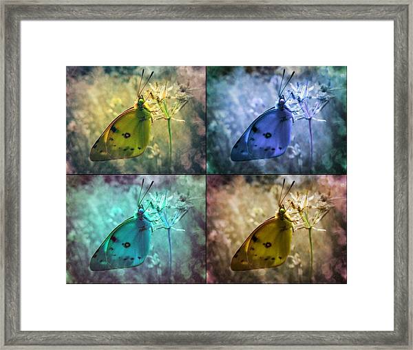 Lives Of A Butterfly Framed Print
