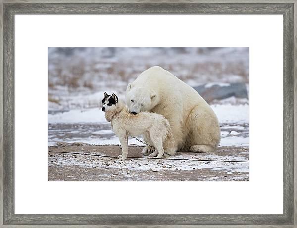 Living Together Framed Print