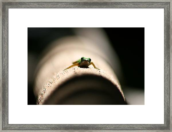 Framed Print featuring the photograph Lizard On A Log by Debbie Cundy