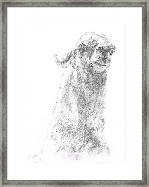 Llama Close Up Framed Print