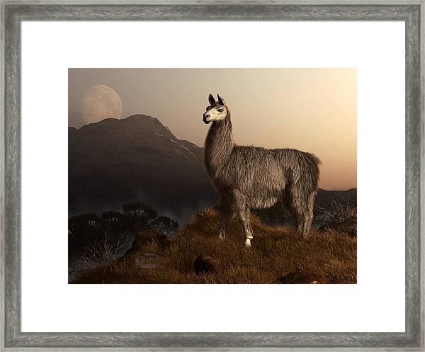 Llama Dawn Framed Print