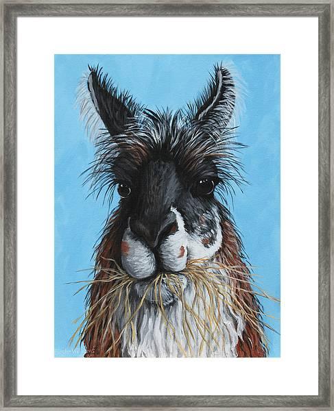 Llama Portrait Framed Print by Penny Birch-Williams