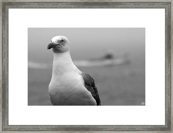Lobster Boat Gull Framed Print