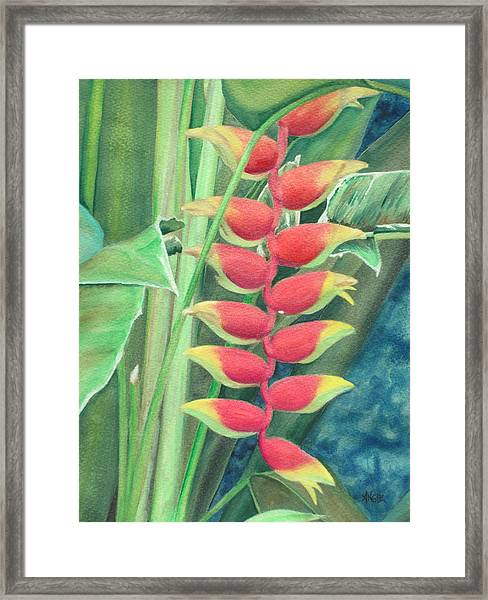 Lobster Claw Framed Print