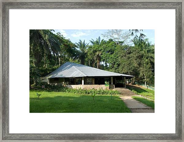 Lola Ya Bonobo Sanctuary Framed Print
