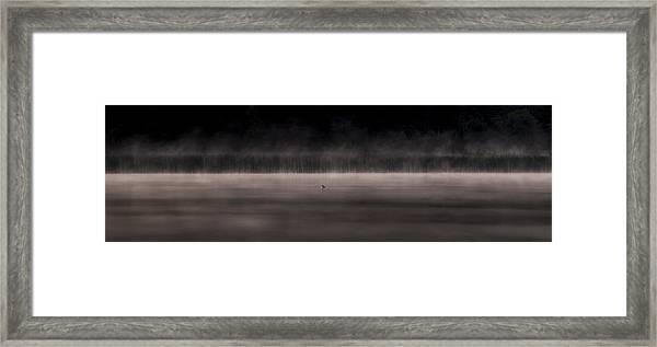 Lone Duck Framed Print