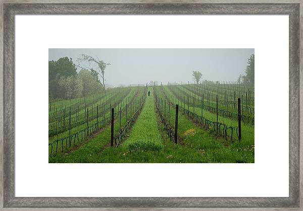 Lone Figure In Vineyard In The Rain On The Mission Peninsula Michigan Framed Print