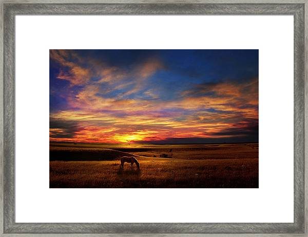 Lone Horse Greenwood County Framed Print