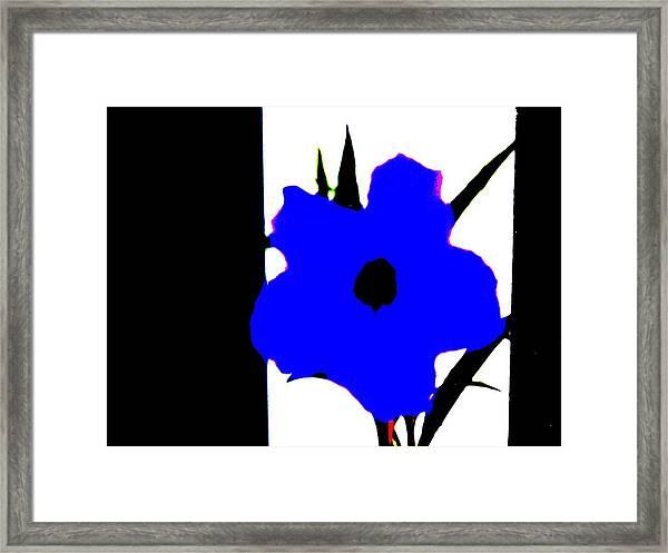 Lone Jack Blue Framed Print