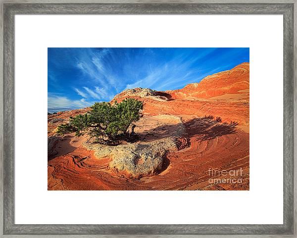Lone Juniper Framed Print