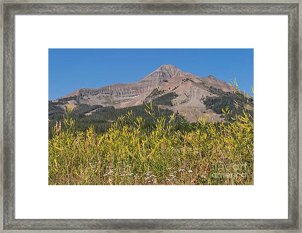 Lone Mountain And Wildflowers Framed Print