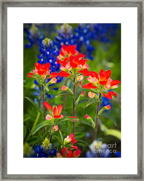 Lone Star Blooms Framed Print
