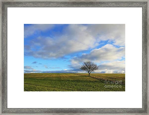 Lone Tree At Epsom Downs Uk Framed Print