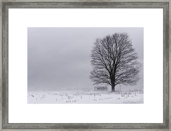 Lone Tree In The Fog Framed Print